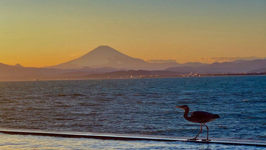 えのすぱ 富士山 鷺