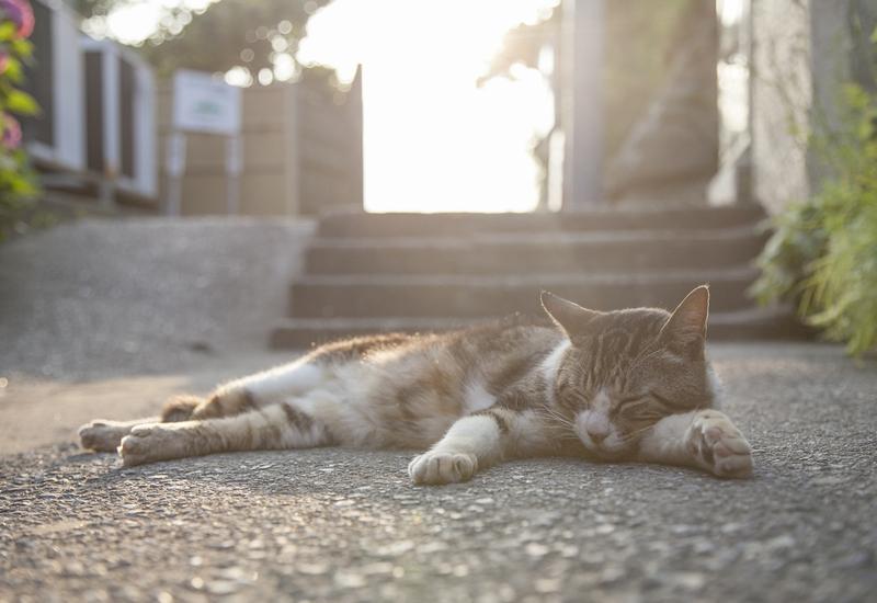 江ノ島 猫
